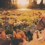 Fall leaves and grass